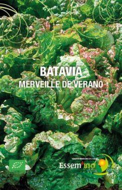 Graines Laitue Batavia Merveille de Verano bio - Essembio