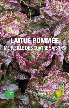 Graines Laitue de printemps Merveille des 4 saisons bio - Essembio