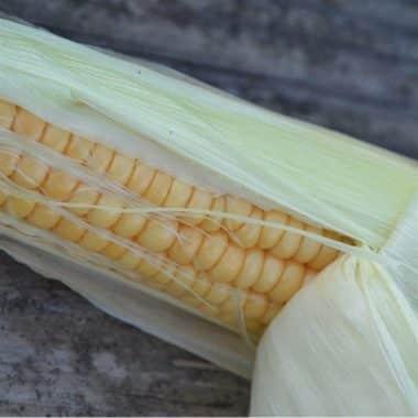 Graines Maïs doux hâtif Golden Bantam bio - Les Semailles