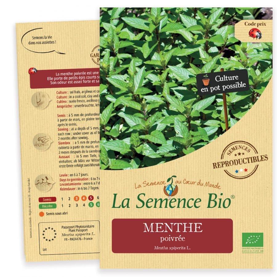 Graines Menthe poivrée bio - La semence bio 1