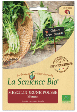 Graines Mesclun jeune pousse Mizuna Bio - La semence bio 1