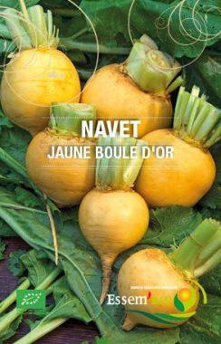 Graines Navet jaune boule d'or bio - Essembio