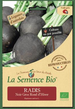 Graines Radis Noir Gros Rond d'Hiver Bio - La semence bio