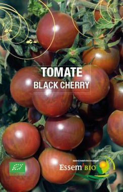 Graines Tomate cerise Black Cherry bio - Essembio