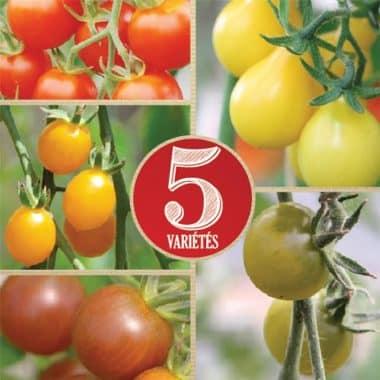 Graines Tomate cerise en mélange bio - Ferme de Sainte Marthe