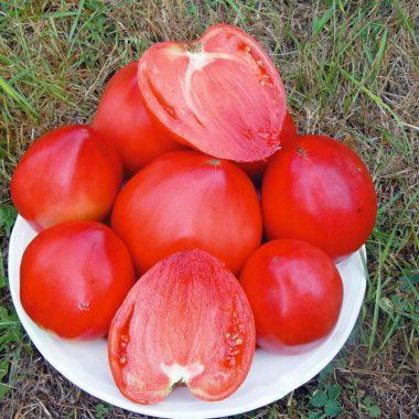 Graines Tomate cœur de bœuf Russe bio - Kokopelli