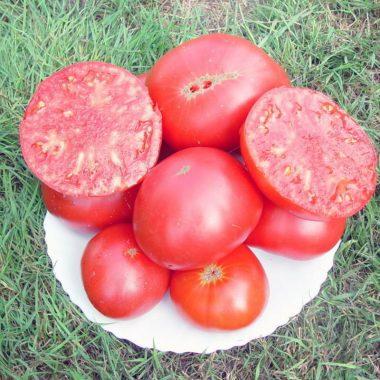 Graines Tomate rose Brandywine Pink bio - Kokopelli