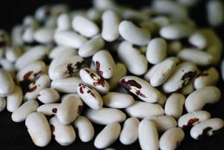 Graines Haricot nain Saint-Esprit à œil rouge à écosser bio - Ferme de Sainte Marthe