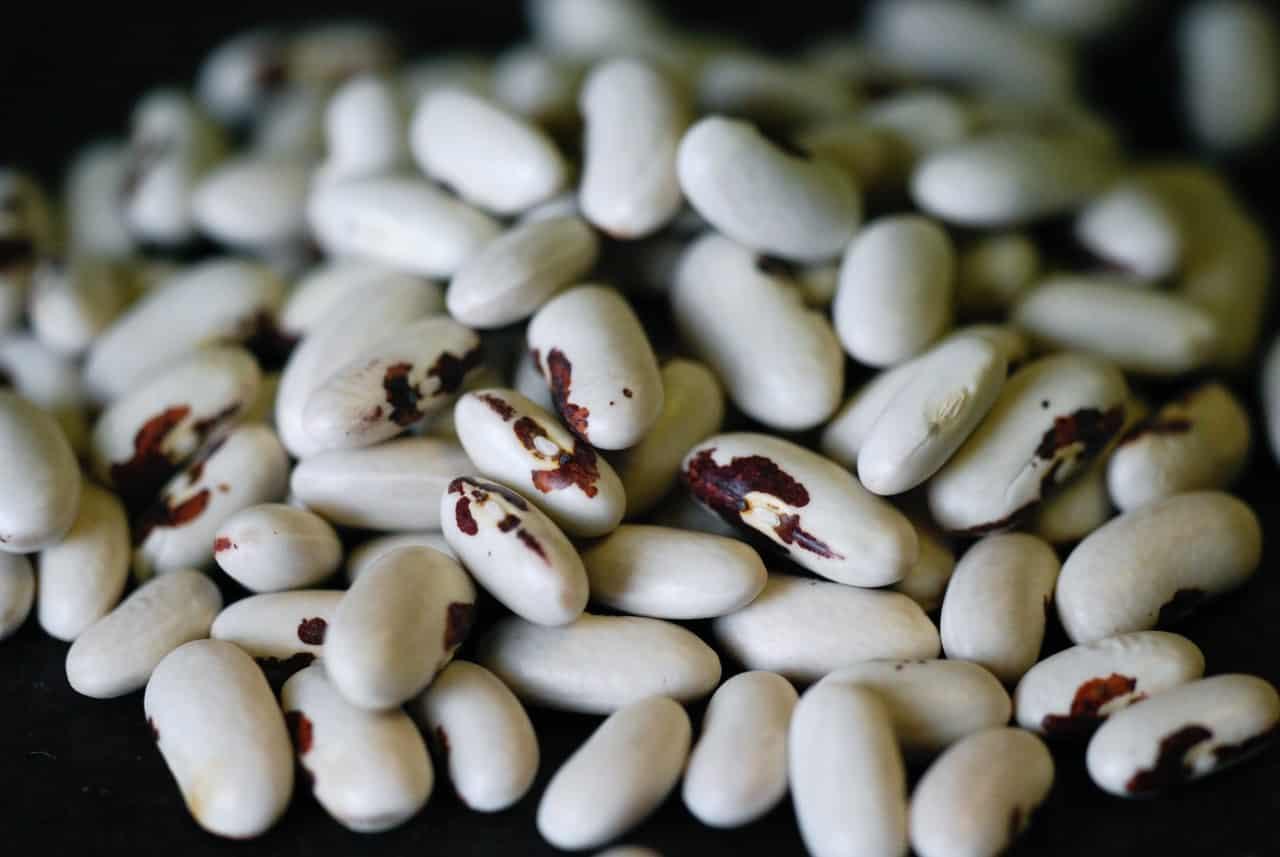 Graines Haricot nain Saint-Esprit à œil rouge à écosser bio – Ferme de Sainte Marthe