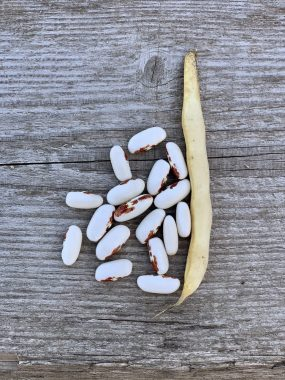 Graines Haricot nain Saint-Esprit à œil rouge à écosser bio - Ferme de Sainte Marthe 1
