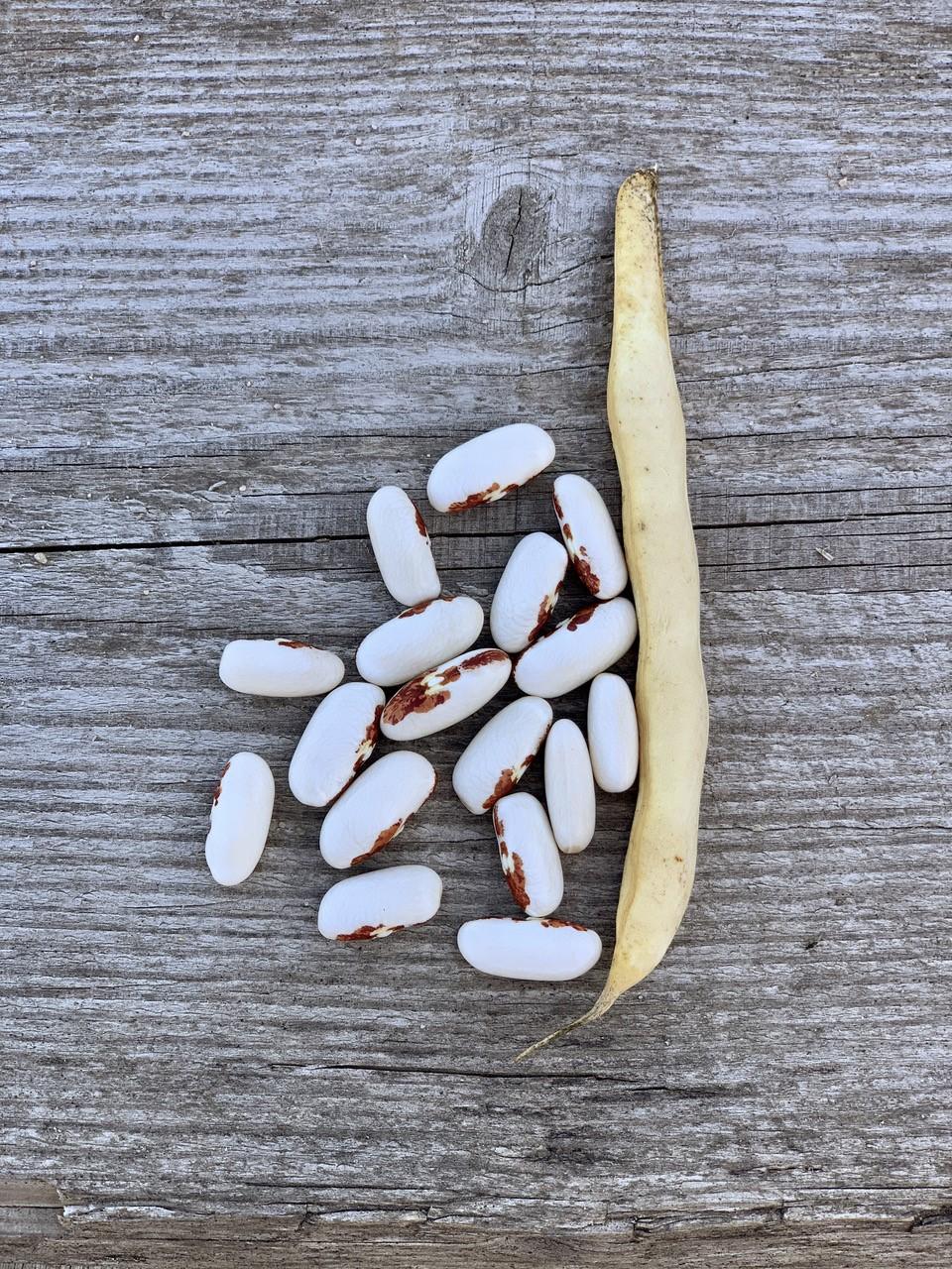 Graines Haricot nain Saint-Esprit à œil rouge à écosser bio – Ferme de Sainte Marthe 1
