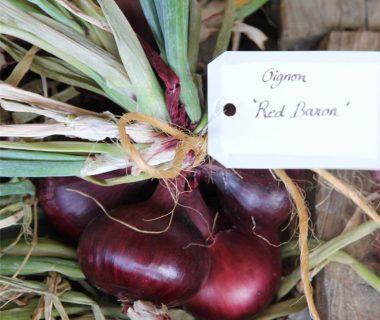 Graines Oignon Red Baron bio - Ferme de Sainte Marthe 1