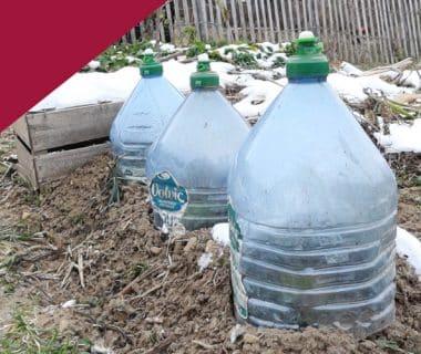 Solutions contre le gel en hiver au jardin 1