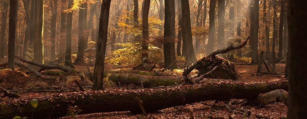 Acheter des forêts pour les protéger   4 saisons n°244