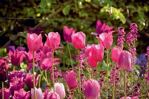 Des tulipes en paniers | 4 saisons n°244 3