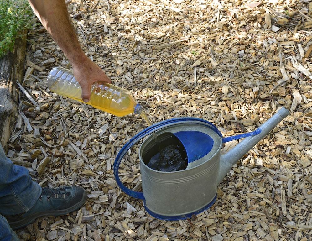 Expérimentation:  Urine, de l'or au jardin 1