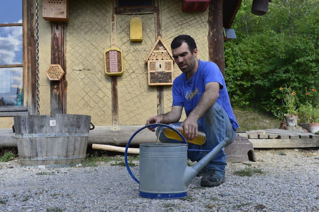 Expérimentation:  Urine, de l'or au jardin 2