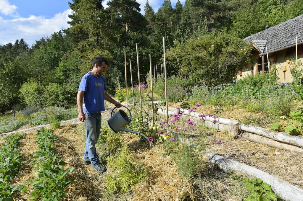Expérimentation:  Urine, de l'or au jardin 3