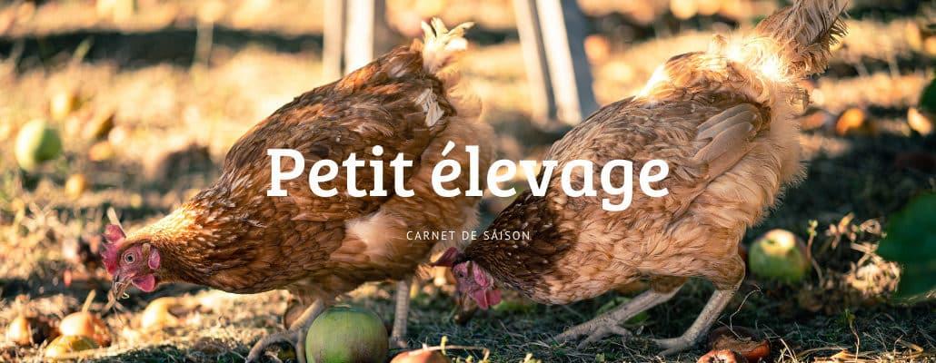 Petit élevage : septembre/octobre | 4 saisons n°244 10