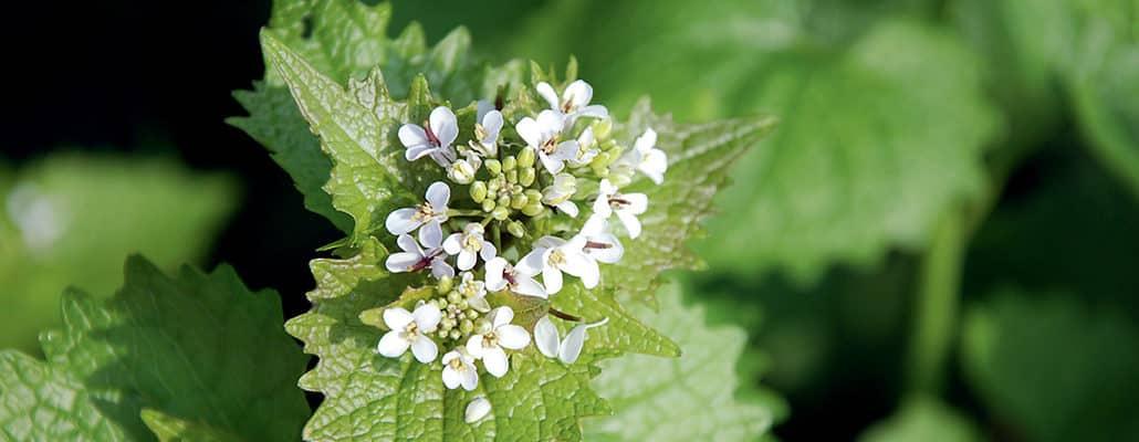Attention : plantes toxiques   4 saisons n°247