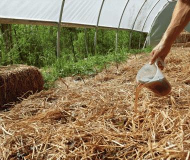 Expérimentation: Thé de compost
