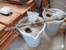 Expérimentation: Thé de compost 5