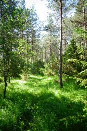 Clairière sentier