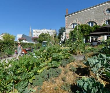 Nantes, laboratoire de l'agriculture urbaine 1