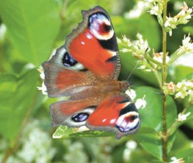 Jardin nature : septembre/octobre | 4 saisons n°244 1