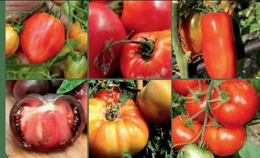 Tomates, courges, salades, haricots, carottes: Vos variétés préférées