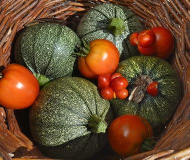 Tomates, courges, salades, haricots: Vos variétés préférées