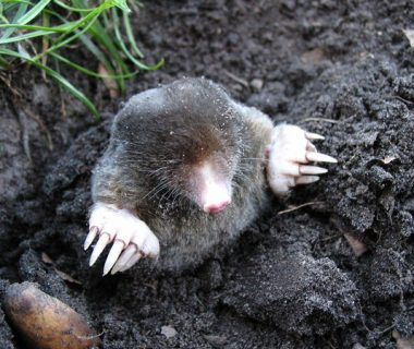Vie du sol : répartition des êtres vivants en fonction de leur taille | 4 saisons n°226 1