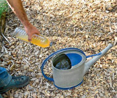 Ils ont testé l'urine au jardin | 4 saisons n°228 1