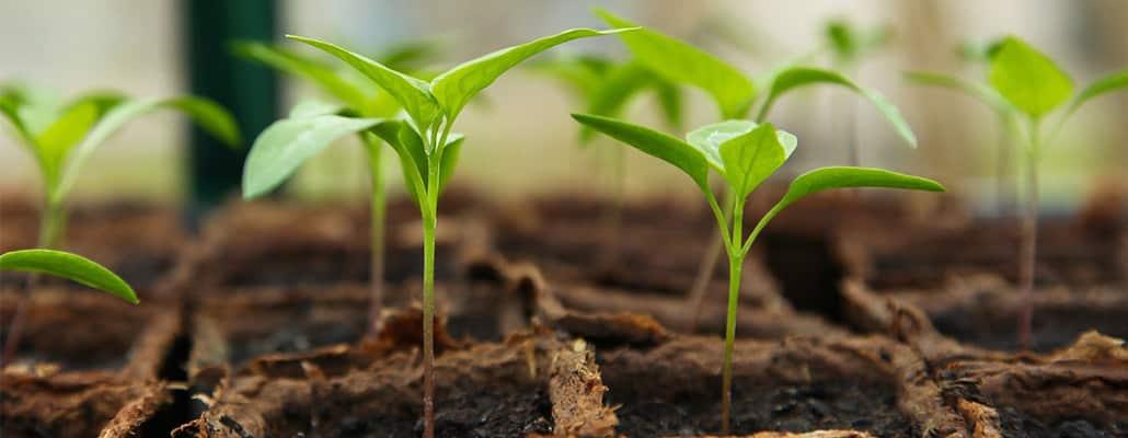 Tout savoir sur les artisans semenciers bio   4 saisons n°235 1