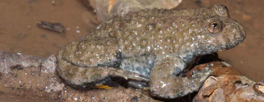 Crapauds et grenouilles de nos jardins | 4 saisons n°236
