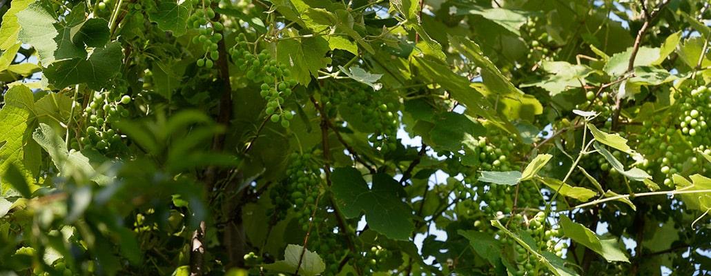 Conseils pour créer une forêt-jardin   4 saisons n°240