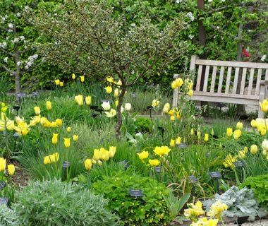Déclinez les variétés de fleurs !   4 saisons n°242 1