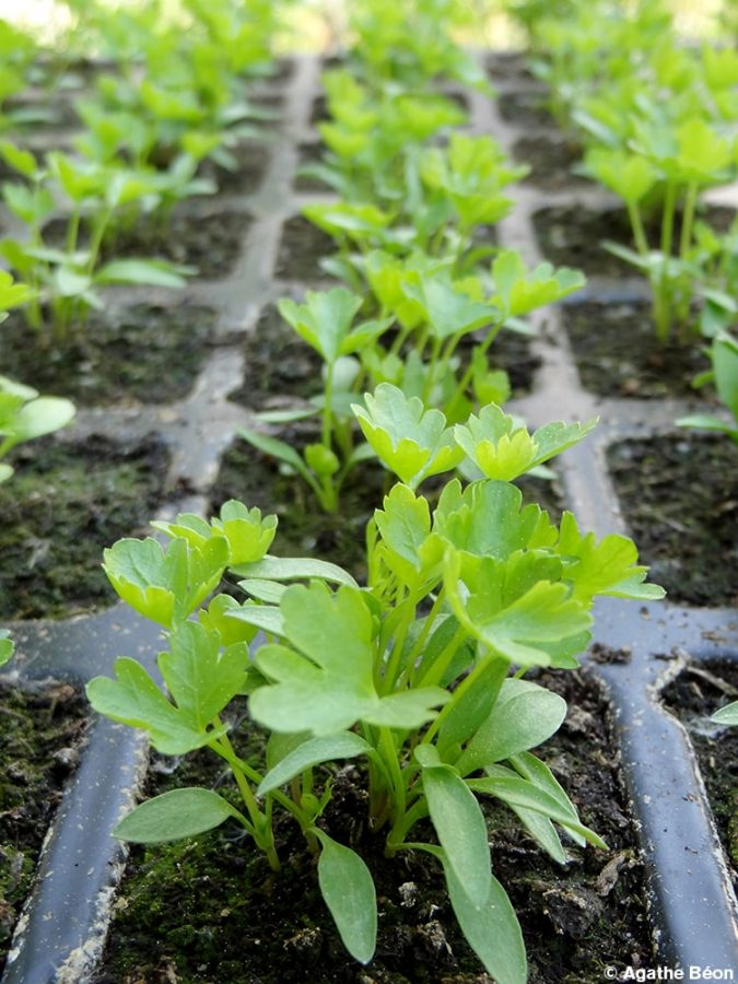 Jardiner sans dépenser