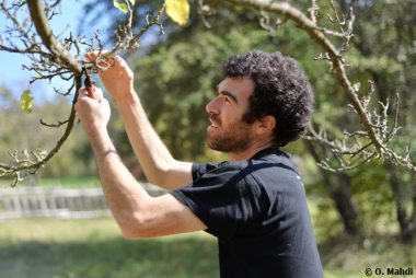 Taille douce des arbres fruitiers
