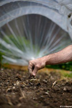 Des semis sans souci !