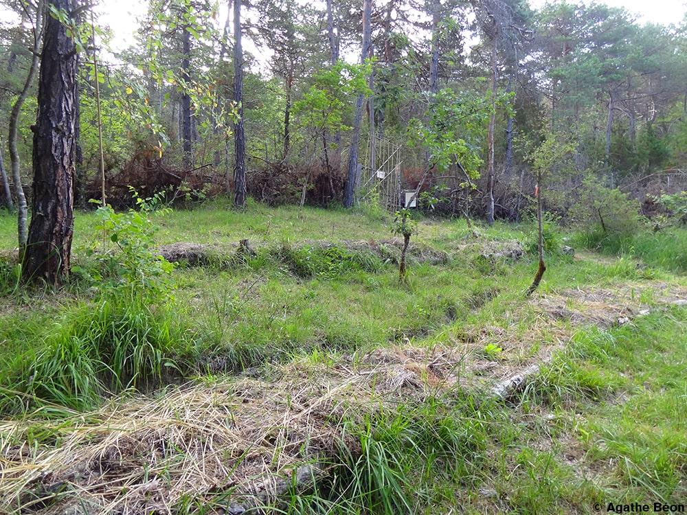 Créer sa forêt-jardin 1