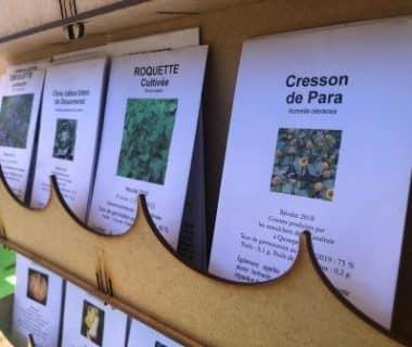Graines de Liberté : une coopérative semencière pour diffuser des variétés populations