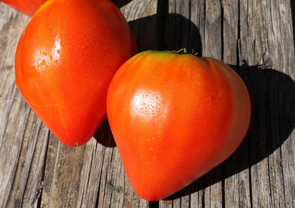 Graines Tomate cœur de bœuf rouge bio – Jardin'enVie 1