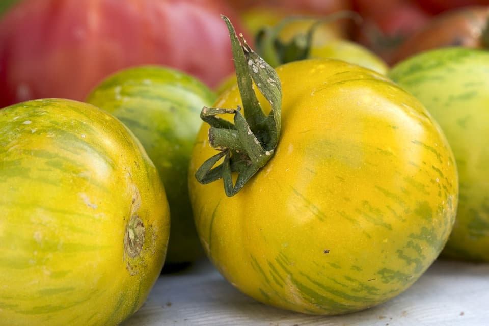 Graines Tomate green zebra bio – Jardin'enVie 3