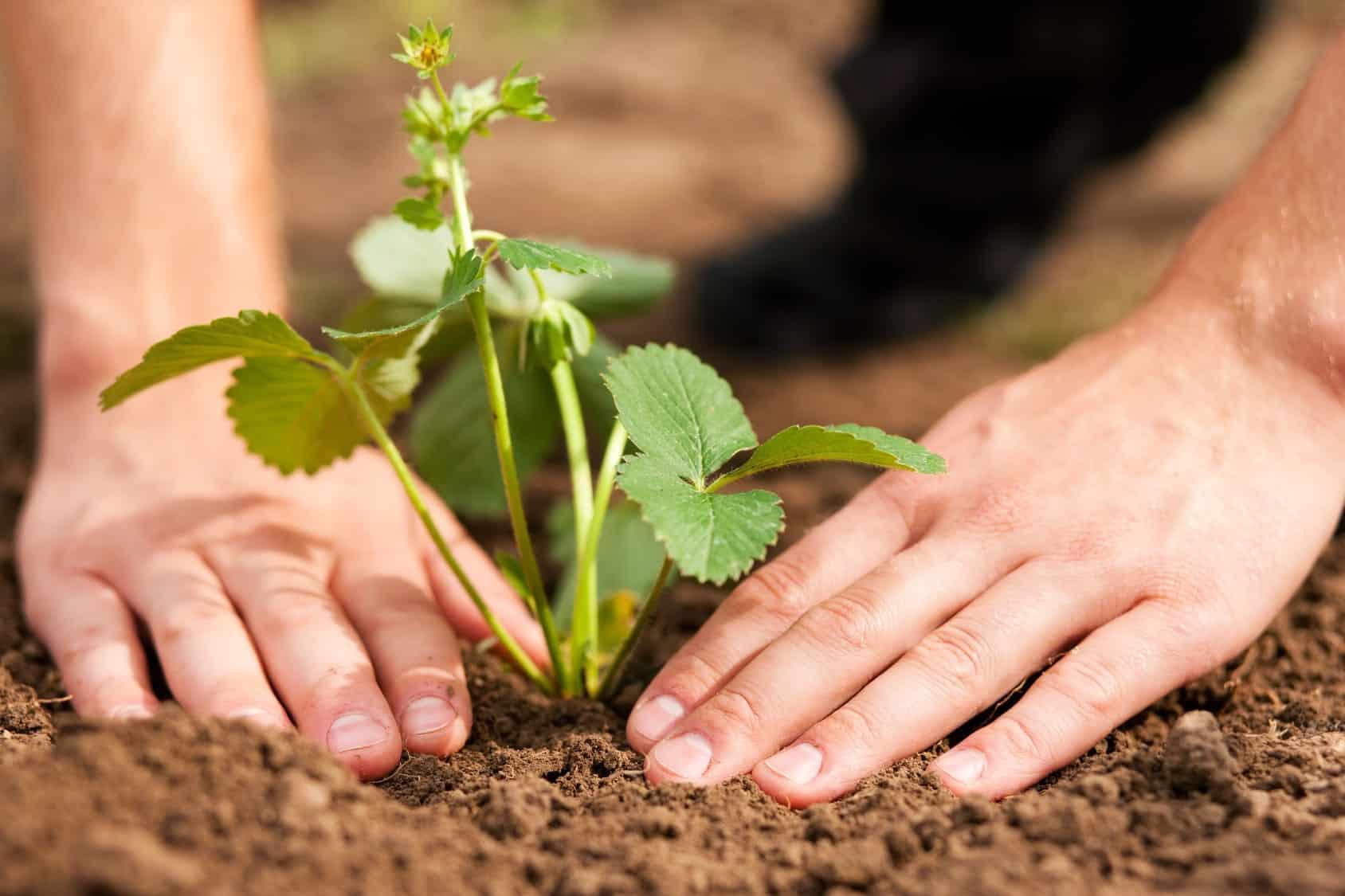jardiner ss dépenser – Kzenon- Fotolia