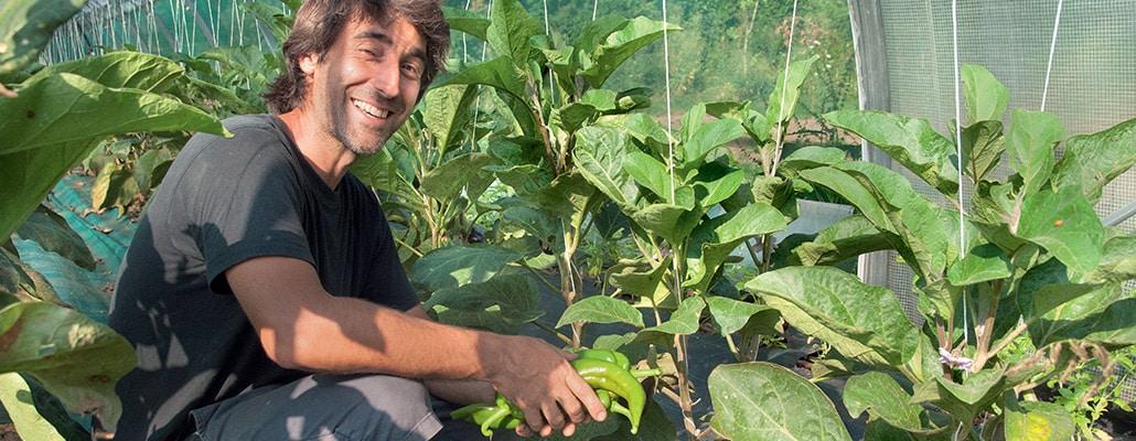 Planifier et optimiser, les leçons du maraîchage bio‑intensif | 4 saisons n°246