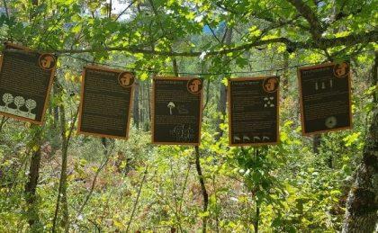 Panneaux champignons