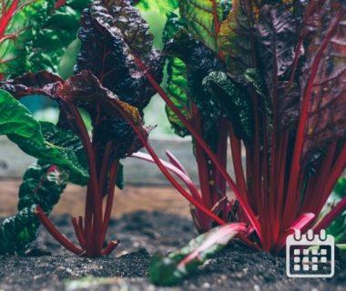 Calendrier des travaux du jardin | Du 16 au 30 septembre 1