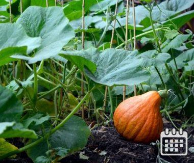 Calendrier des travaux du jardin | Du 1er au 15 octobre 1