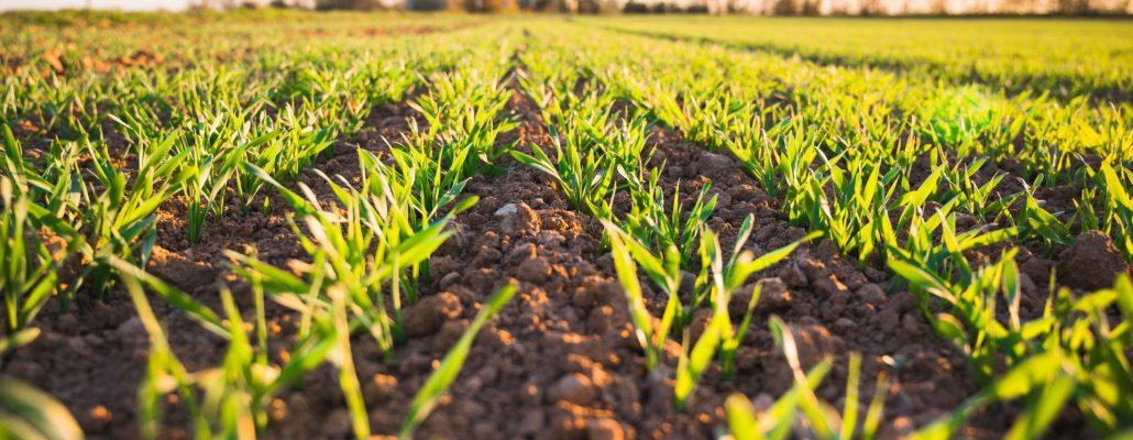 Sol et Climat : un MOOC sur le rôle des sols face aux enjeux de sécurité alimentaire et de changement climatique